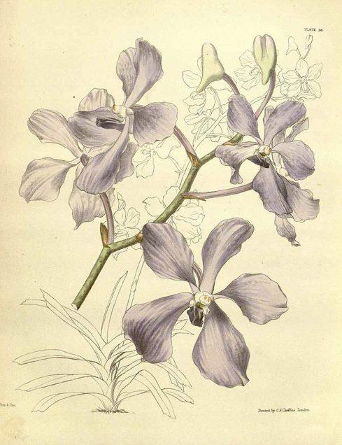 Orchideen Teil II: Jagd und Abenteuer