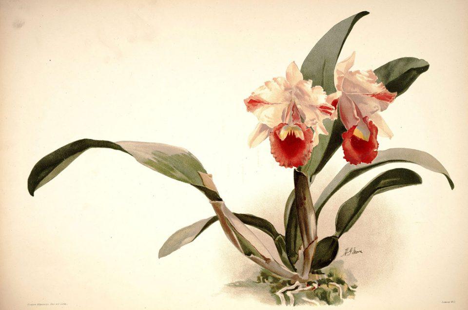 Orchideen Teil III: Die Welt als Untertan