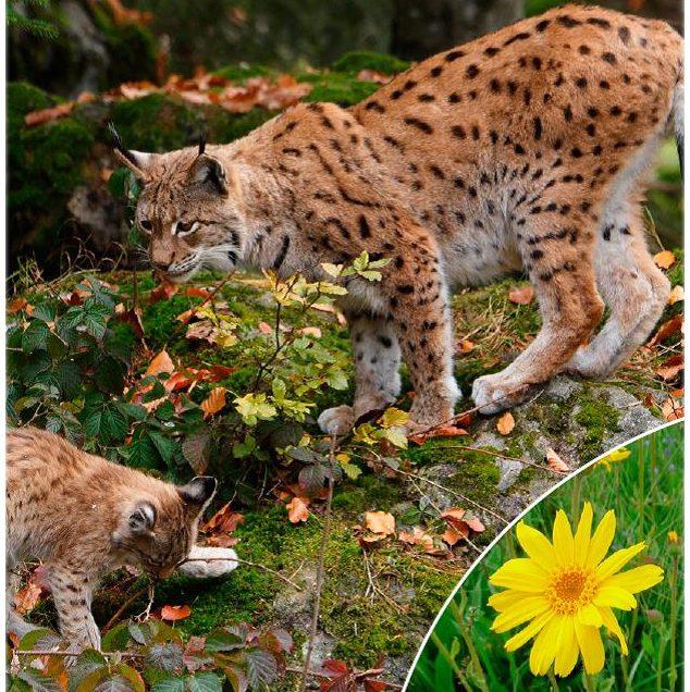 Der erste Artenschutzreport