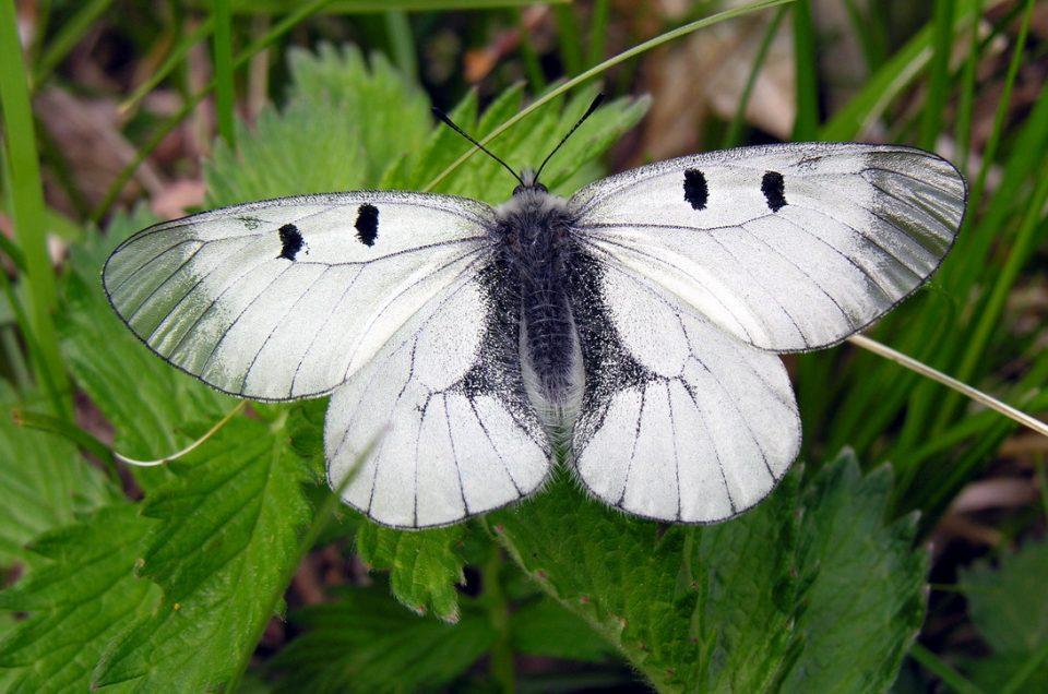 Weltweit 1 Million Arten bedroht