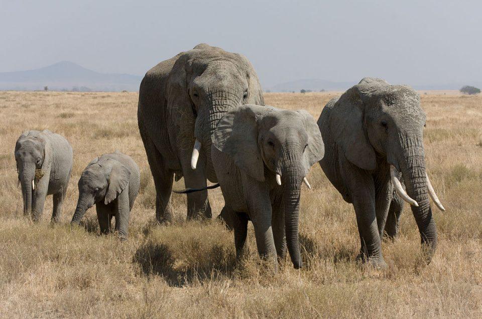 Naturwelterbe Tansanias in Gefahr