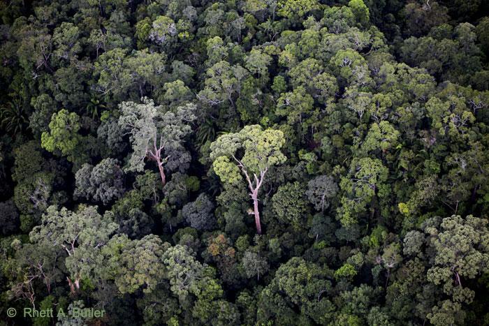 Mongabay – Die Nachrichtenseite für Regenwälder und Wildtiere