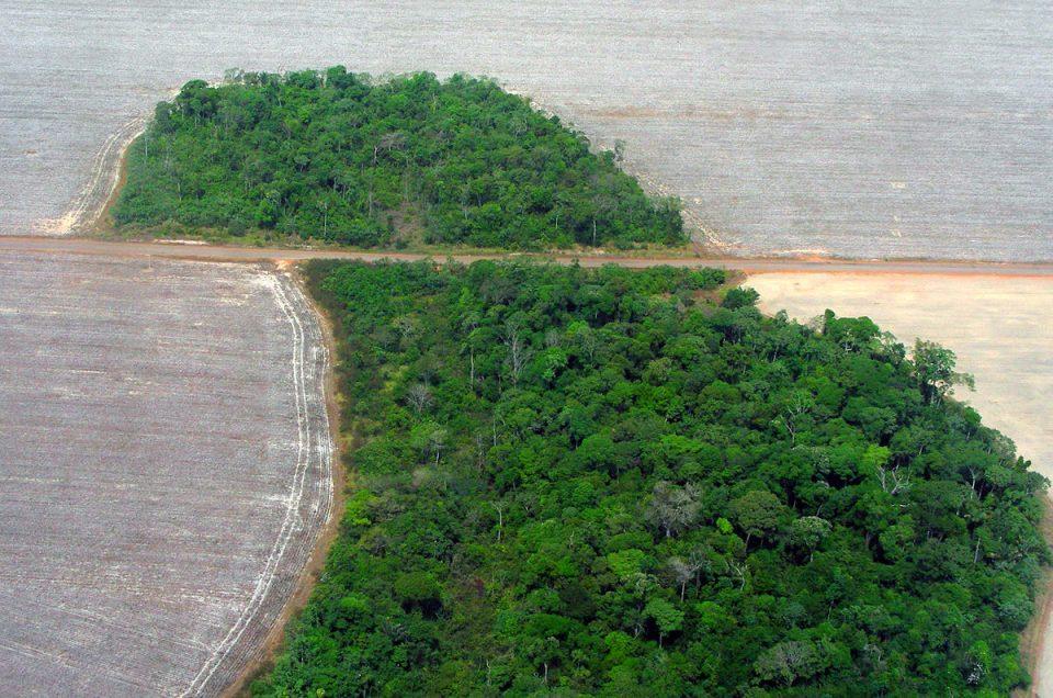 Über den Zusammenhang zwischen Waldfläche und Entwicklung