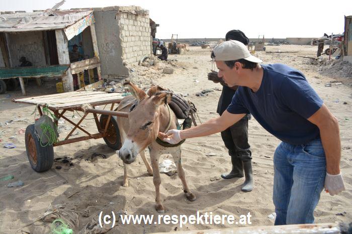 Das Los der Nutztiere – Der RespekTiere Jahresrückblick