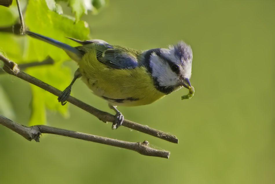 Neue Wohnungen für Stadtvögel
