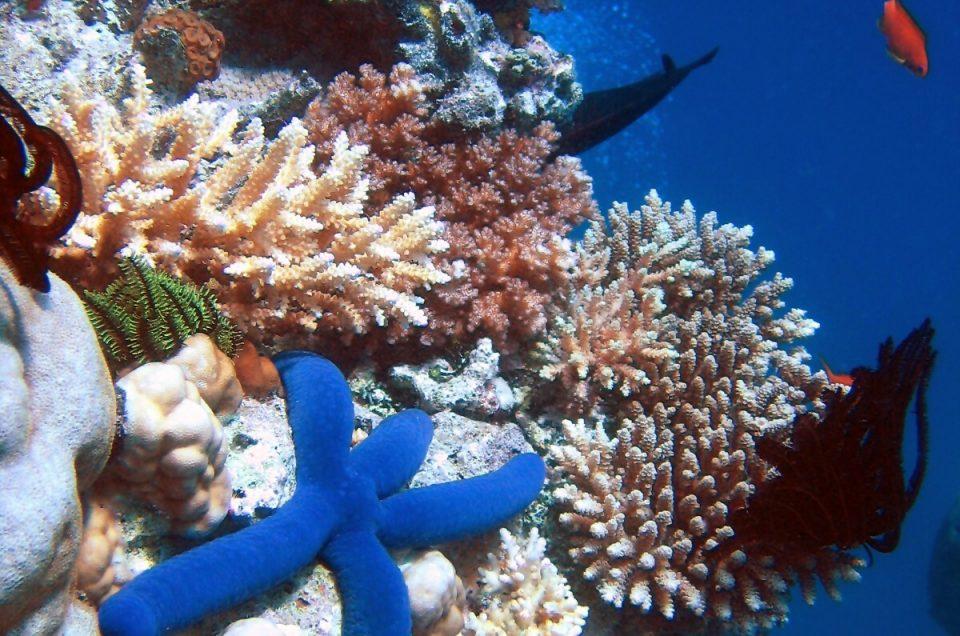 Keine Zeit für Erholung – die Korallenbleiche am Great Barrier Reef