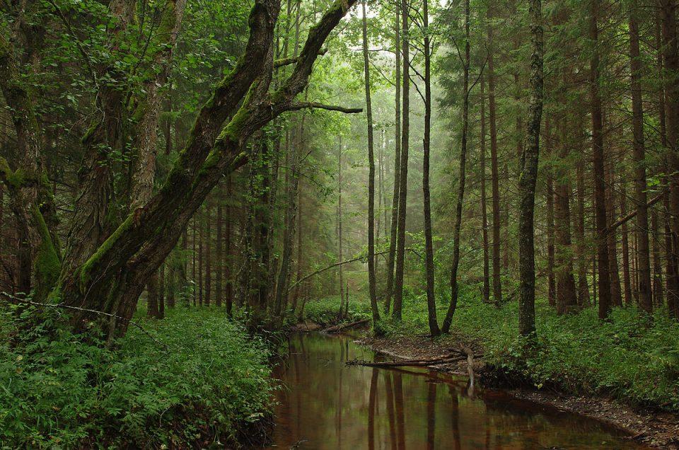Der Klimawandel – Große Herausforderungen für unsere Wälder