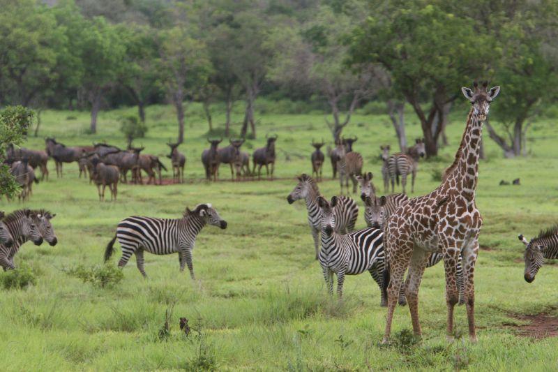 Tansania – Für die Rettung von Selous, Folge I