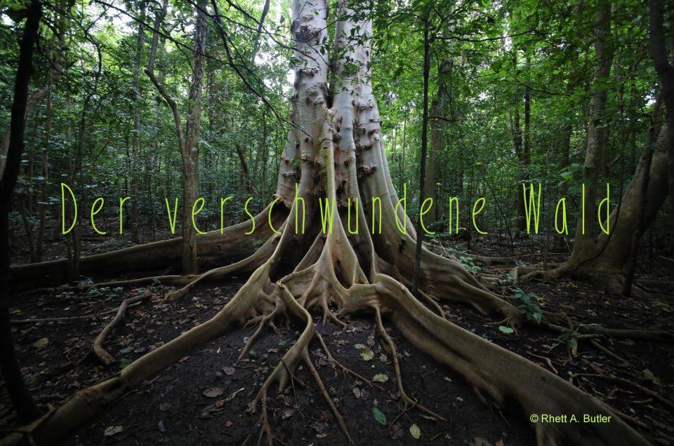 Der verschwundene Wald