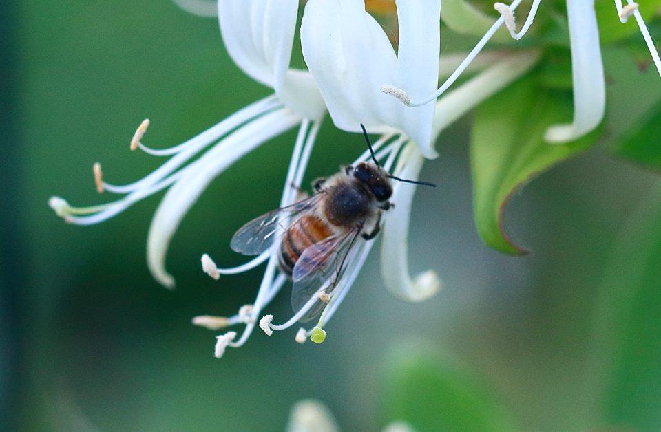 """Gesucht: 1 Million Unterschriften für Volksbegehren """"Rettet die Bienen"""""""