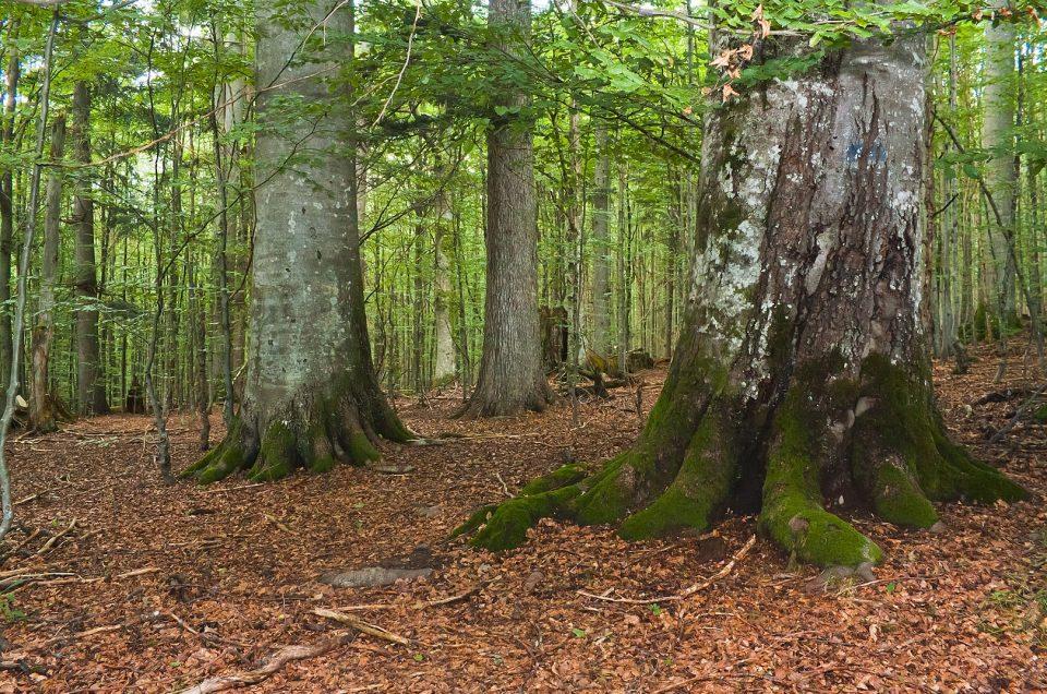 Millionen für wetterfeste Wälder