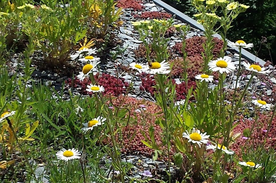 Dächer für die Artenvielfalt