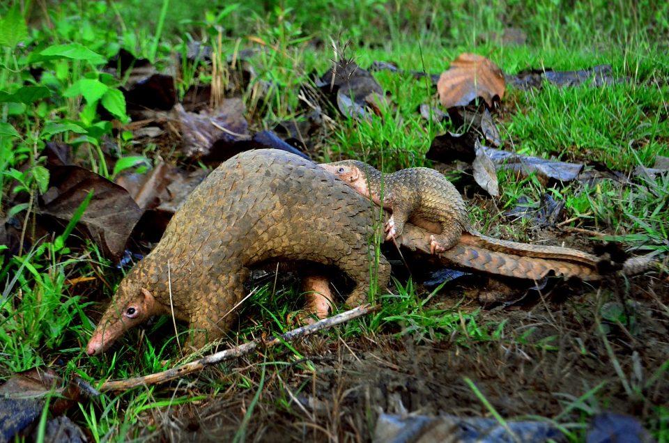 Vietnam verbietet alle Wildtiermärkte